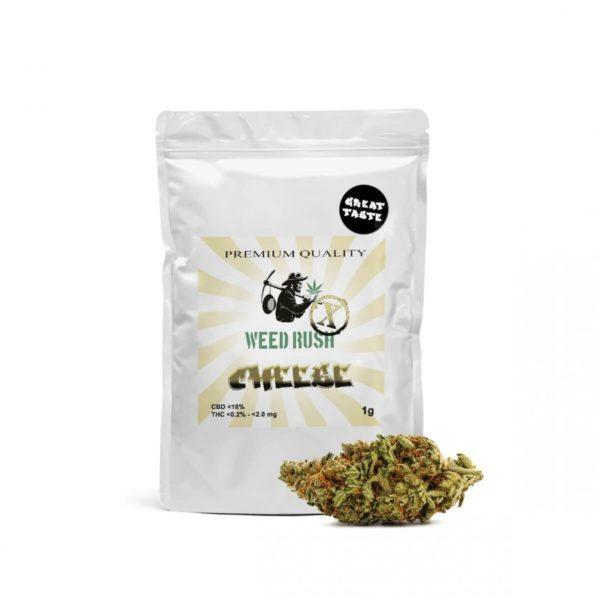 Weed Rush - Cheese CBD Flowers 1gr