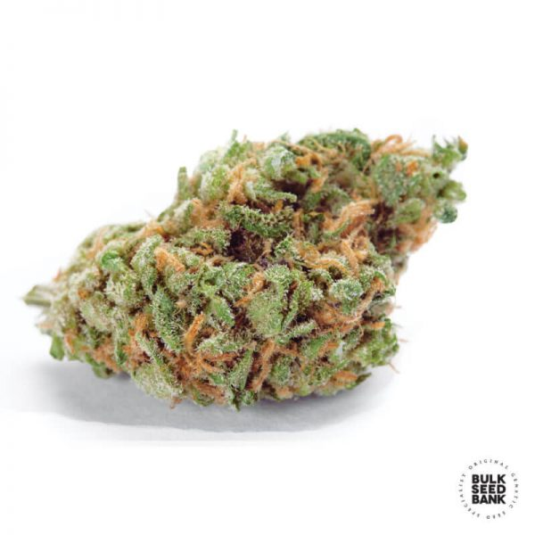 Cannabis bud derived from the plant of the autoflowering feminized seeds of Bulk Seed Bank.