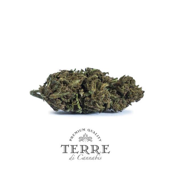 Terre Di Cannabis Diva - 2gr. - buds photo - 3