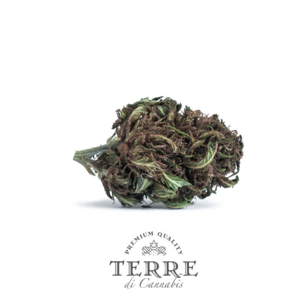 Terre Di Cannabis Stella - 2gr. - photo of the bud - 3