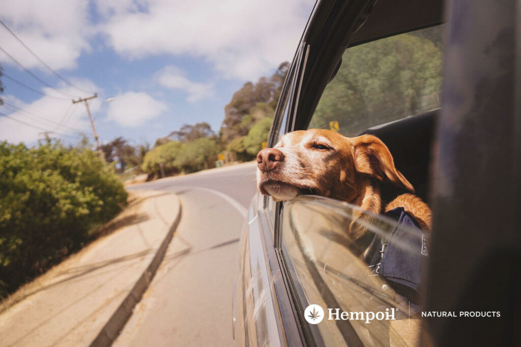 Dog in a car having vacation.