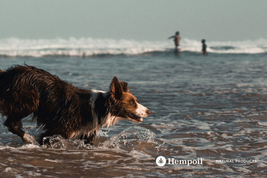Dog playing in the sea during summer vacation